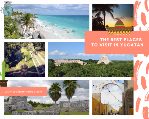 The best places to visit in Yucatan - koalas on the road