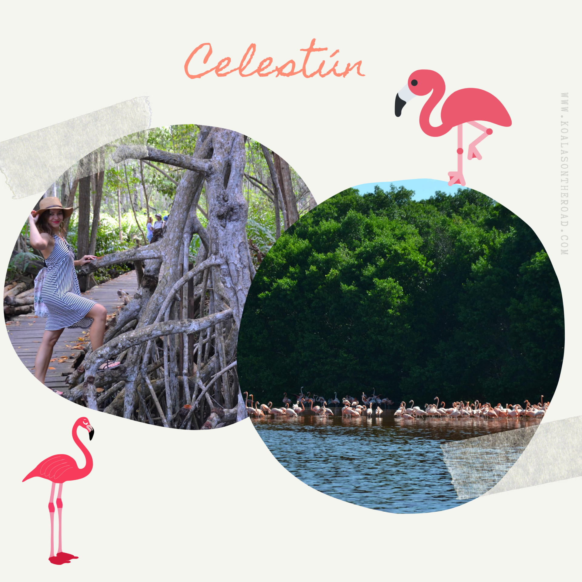 The best places to visit in Yucatan - koalas on the road - Celestun