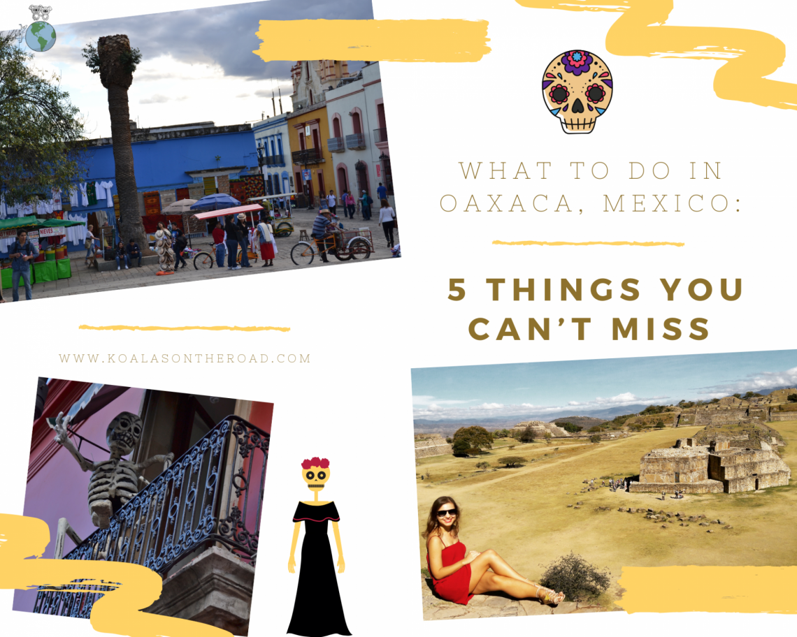 What to do in Oaxaca, Mexico - koalas on the road