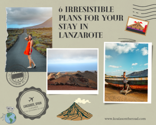 6 irresisitble plus for your stay in Lanzarote - koalas on the road